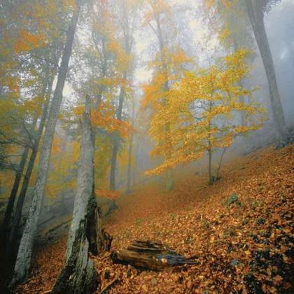 Прогулка по осеннему Крымскому лесу